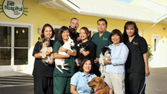 Kakaako Pet Hospital | ALOHA DOG