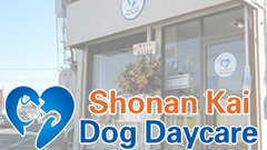 Shonan Kai Dog Daycare | ALOHA DOG